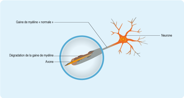 neurone-axone - ©CNAMTS 2011